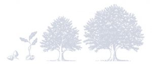 Graphic of several growth stages to a tree